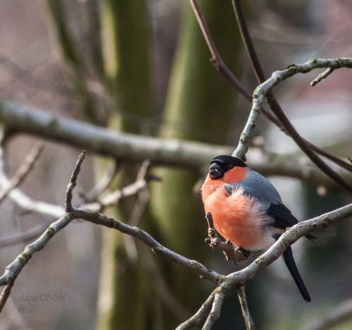 przy dzisiejszym mroznym wietrze, ptaki siedzialy a ich pióra fruwaly:)) #ptaki #natura #przyroda #alicjaszrednicka