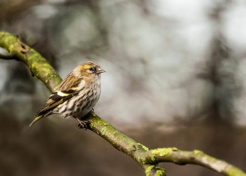 codziennie je fotografuje i nie moge przestac:))uwielbiam wszystkie ptaki:) #ptaki #ogrody #alicjaszrednicka #ptaki w #naturze