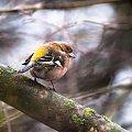 #ptaki #ogrody #alicjaszrednicka #natura