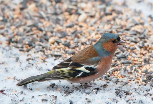 powrócila zima :) #zima #ptaki #ogrody