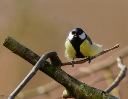 Bogatka-taki Hippis.-:)) #ptaki #ogrody #alicjaszrednicka #natura #przyroda