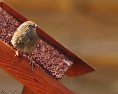 pokrzywnica,- #ptaki #ogrody #alicjaszrednicka #natura #przyroda