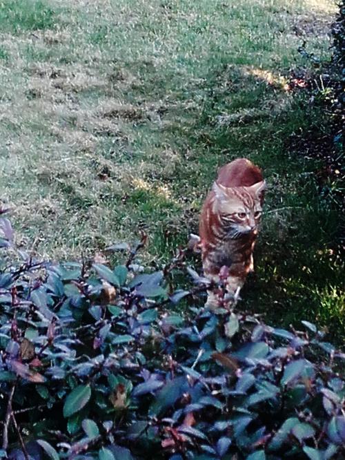 Ciekawy kotek