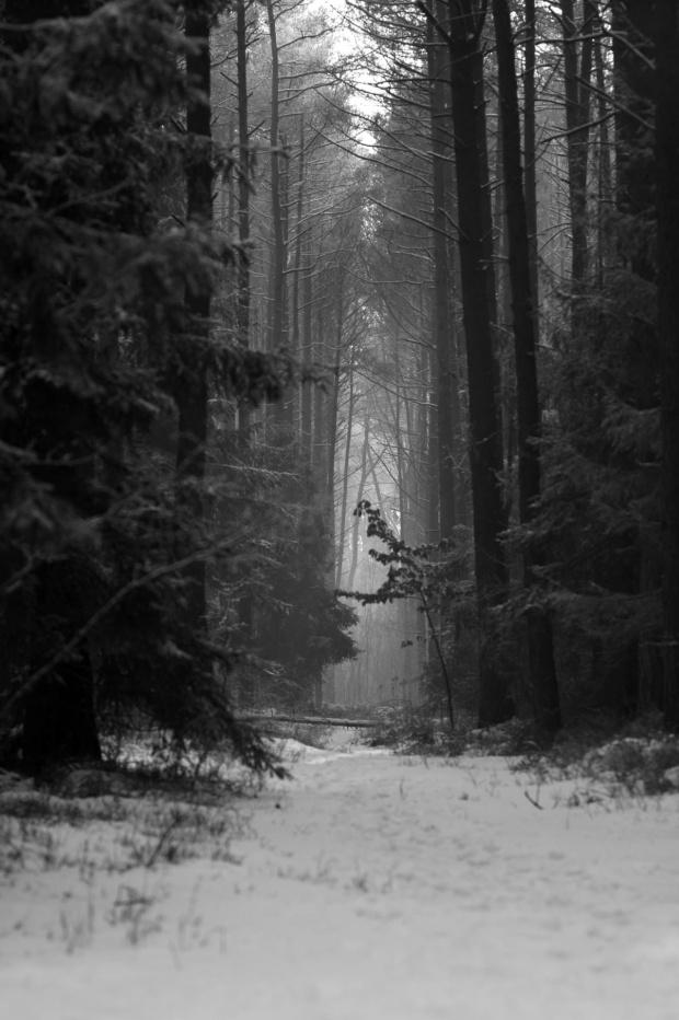 A tymczasem w lesie...