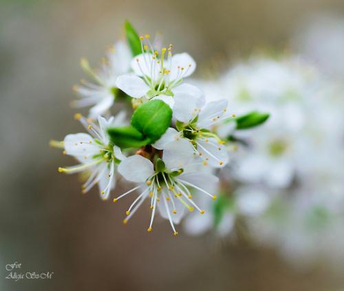 glóg rosnacy w lesie,przypuszczam ,ze nazywa sieGłóg jednoszyjkowy #wiosna #lasy #krzewy #natura #przyroda #glóg