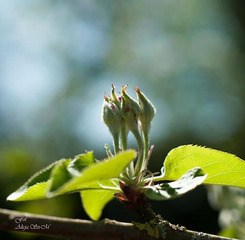 #krzewy #kwiaty #ogrody #drzewa #natura #przyroda