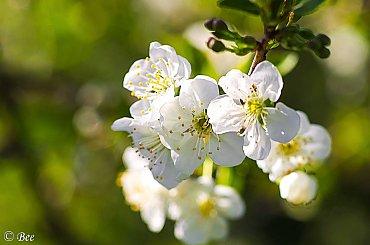 Kwitnące drzewa
