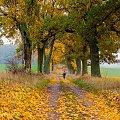 Spowita zamgleniem kolorowa jesień #rower #jesień #Chojnice #zamglenie