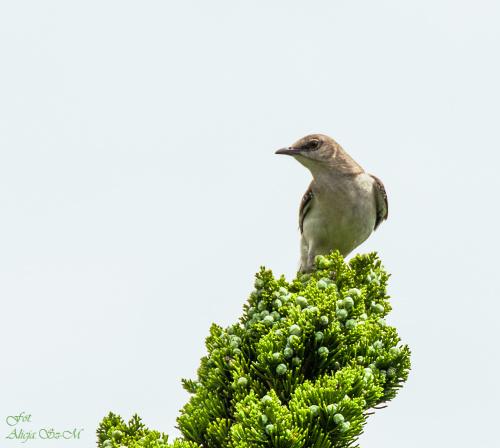 #ptaki #USA #przyroda #natura #alicjaszrednicka