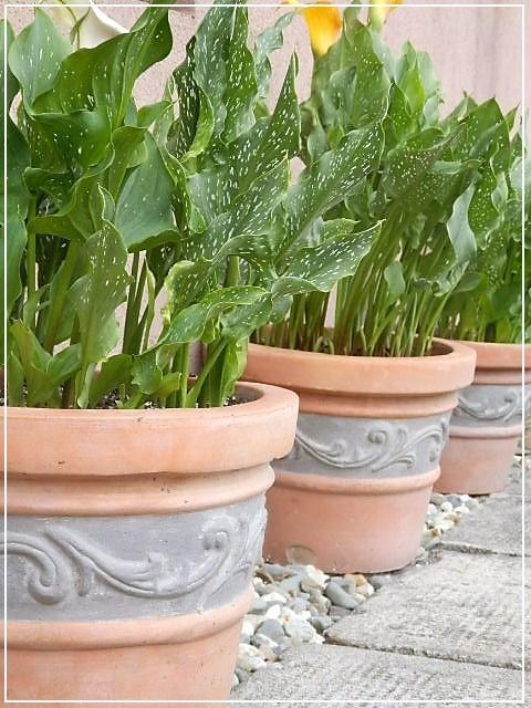 ogród-kantedeskie