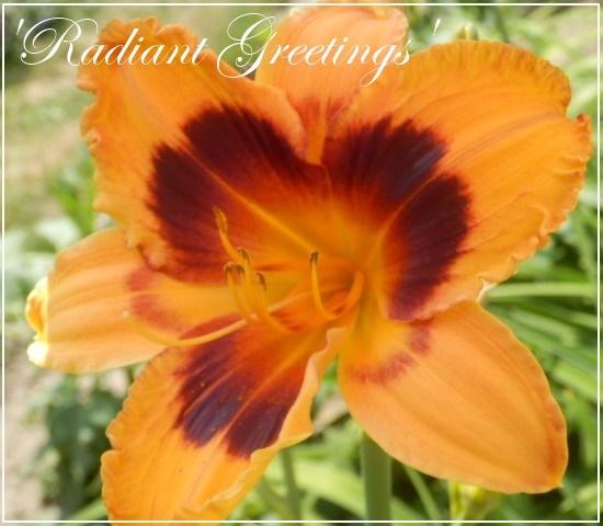 hem 'radiant greetings'