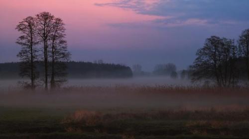 Krajobraz z mgiełką