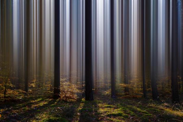 Leśna kurtyna