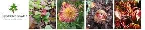 Ogrodnictwo od A do Z