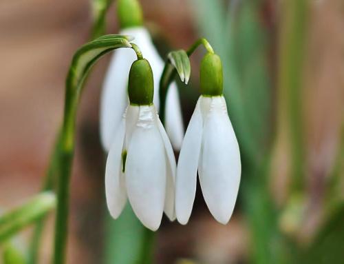 przyszła wiosna .... niech trwa