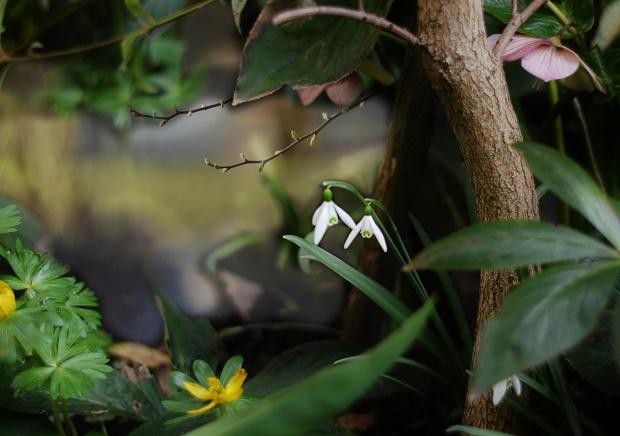wiosną w ogrodzie
