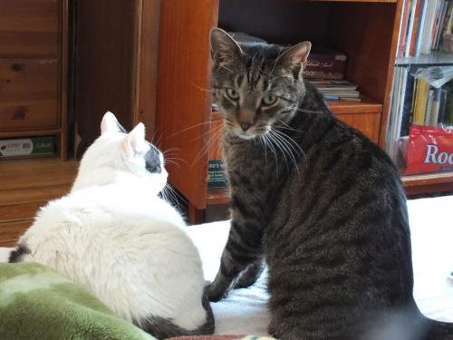 Puzio i Małi-Małi