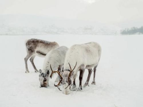Piekna zima za arktycznym kolem. Norwegia
