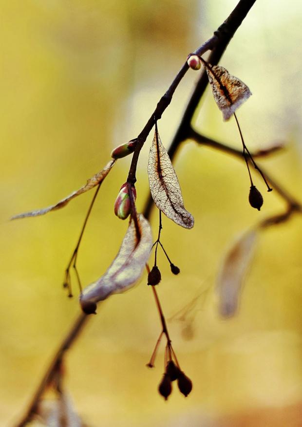 i tylko pąk świadczy o wiośnie