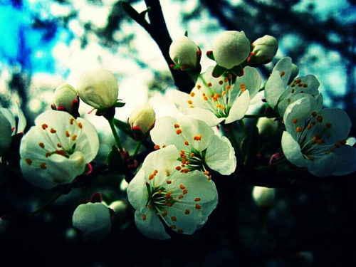 Prawdziwa wiosna