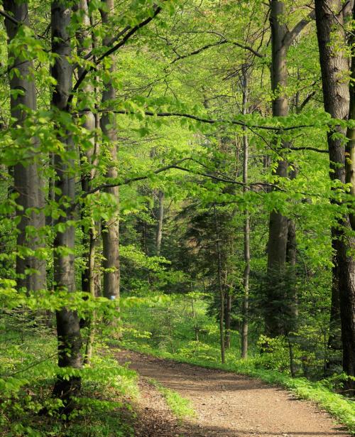 leśne zieloności wiosenne