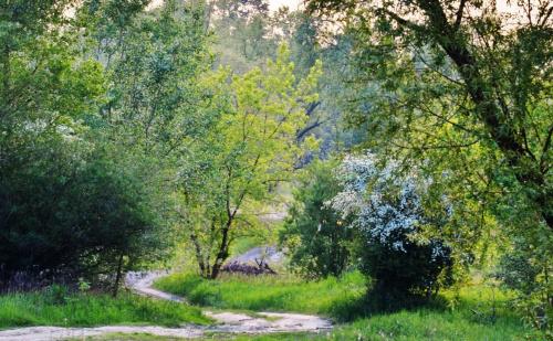 wąską ścieżką wśród wiosennej zieleni