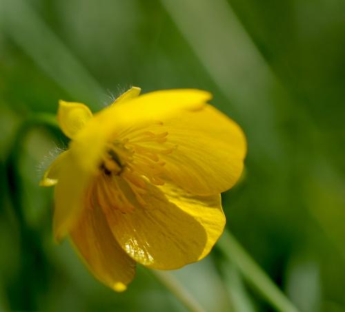 takie malutkie a duze:) #polne #kwiaty #macro #alicjaszrednicka