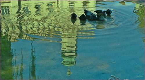 letnia kąpiel na placu Wolnica