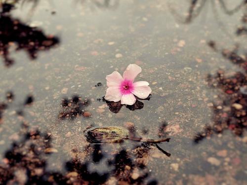 w deszczowym strumieniu