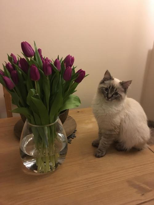 Mama dostala kwiaty a moze ja?