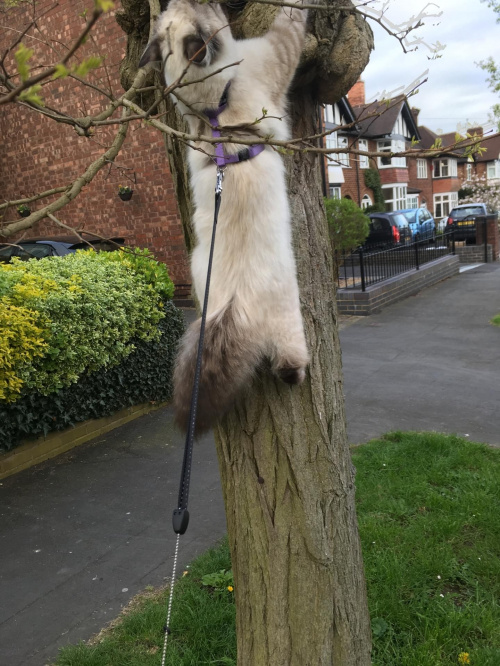 Umiem sie wspinac na drzewko