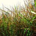 #łąka #niebo #trawa #natura #krajobraz