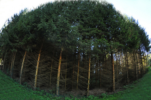 taki sobie krotko przystrzyzony:lasek)) #lasy #jesienne #drogi alicjaszrednicka-mondritzki