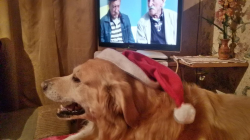 Brutus *Labrador Retriever* :D
