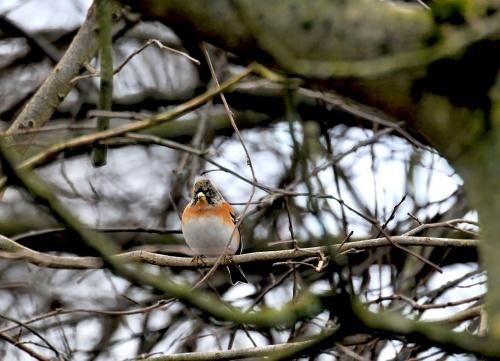 Noworoczni Goscie:) #ptaki #ogrody #alicjaszrednicka