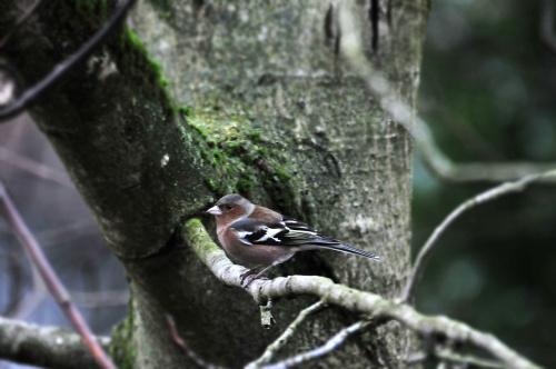 Pora obiadowa ,szkoda ,ze niesloneczna:( te ptaki normalnie sie u mnie stoluja o odpowiednich porach i zawsze tych samych :)) #natura #przyroda #ptaki #alicjaszrednicka