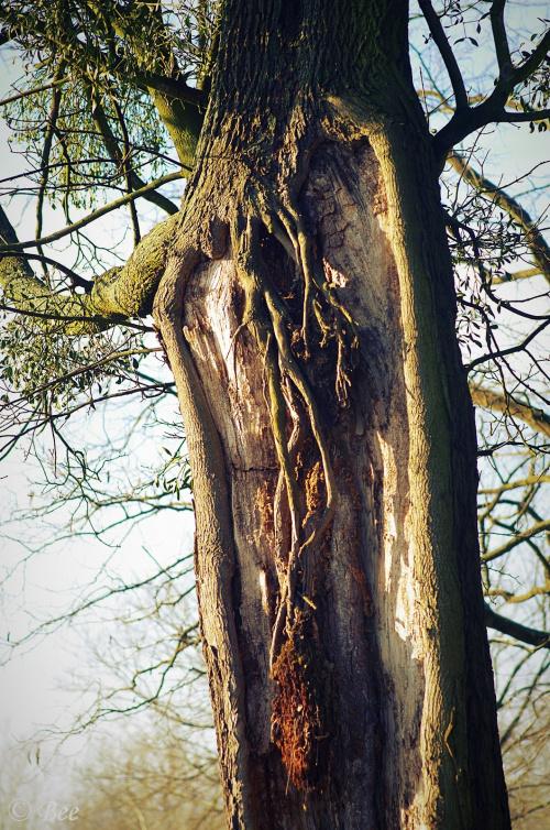 Życie drzew to nieustanna walka ......