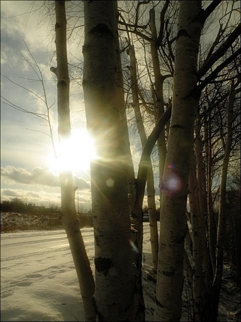 Zza drzew...