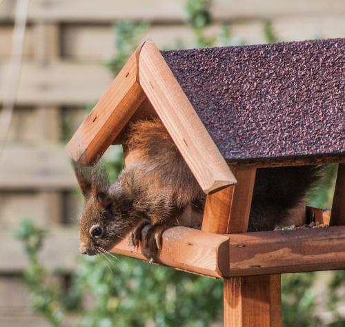 :)wiewiórki #zwierzeta #wiewiórki